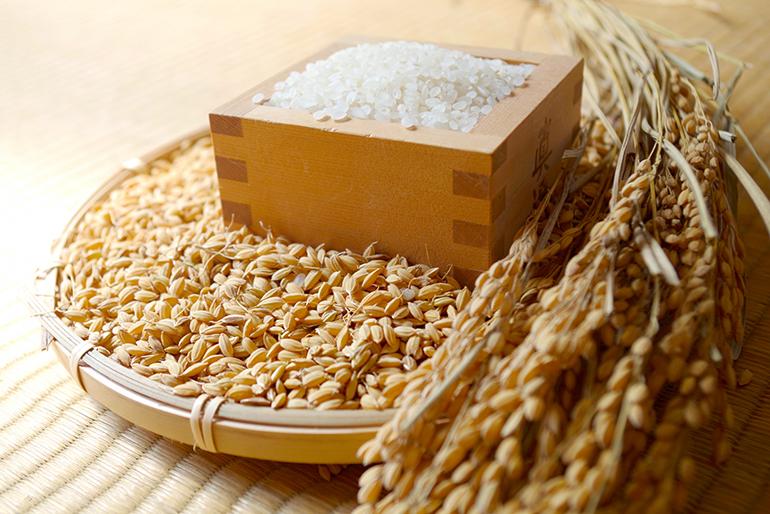 美味しさの秘密は、お米の鮮度を保つ「今摺米」